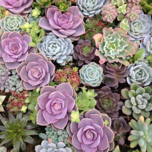 Succulents Workshop